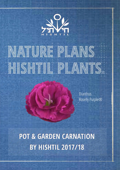 Hishtil Pot & Garden Carnation 2018
